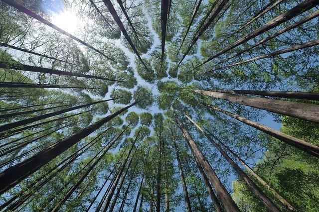 Webinar: Where to Begin with Healing, June 27, 2018